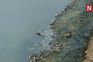 Cận cảnh ngưng xả nước, sông Tô Lịch lại đen xì, cá chết trắng 2 bên bờ