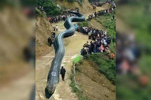 Biến ảnh rắn thành rồng rồi tung tin đồn nhảm, người đàn ông nhận cái kết đắng