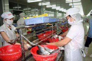 Xuất khẩu cá tra sang ASEAN tăng trưởng tốt