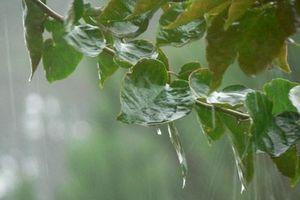 Vùng núi phía Bắc có mưa to cục bộ; miền Trung nắng nóng kéo dài