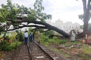 Đường sắt tê liệt do cây xanh đổ ngang đường ray