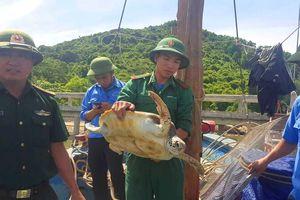 Thả rùa nặng 18kg về môi trường biển