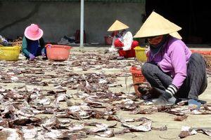 Gần 1.000 tấn mực khô ứ đọng do Trung Quốc ngừng mua đã được 'giải phóng'