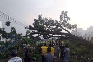 Cây xanh bật gốc trong cơn mưa lớn, 'phong tỏa' đường sắt ở Biên Hòa