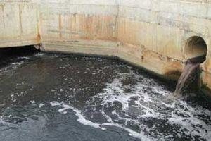 Phạt công ty Noah Vina 300 triệu đồng vì gây ô nhiễm môi trường