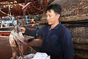 Quảng Nam: Hàng trăm tấn mực khô tìm được đầu ra sau nhiều tháng ứ đọng