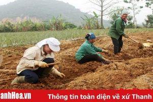 Để các tổ hợp tác nông nghiệp phát huy hiệu quả hoạt động và phát triển bền vững