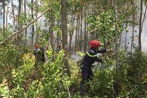 Cháy rừng tại núi Phú Gia, Quảng Ngãi