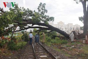 Đường sắt Bắc – Nam tê liệt nhiều giờ đoạn qua TP. Biên Hòa vì cây đổ