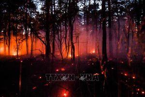 'Giặc lửa' tấn công khu cắm trại nổi tiếng của Pháp - Cháy rừng trên diện rộng tại Mexico