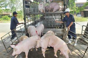 Lo thiếu thịt lợn vào cuối năm