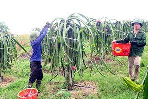 Vĩnh Phúc: Lập Thạch xây dựng NTM gắn với chuyển đổi cây trồng, vật nuôi theo hướng sản xuất hàng hóa
