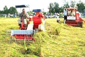 Địa phương được sử dụng trên 50% kinh phí hỗ trợ cho người trồng lúa