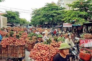 Diện tích hồ tiêu Việt Nam tăng nóng gần 200%