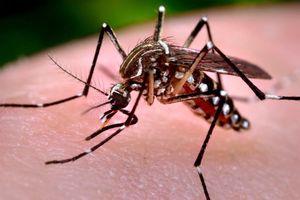 Nguyên nhân gây bệnh sốt xuất huyết