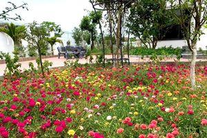 Nhà rộng 800m2 nhưng dành nửa diện tích để trồng hoa và rau sạch