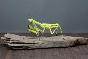 Mê mẩn bộ sưu tập côn trùng bằng giấy nhìn y như thật