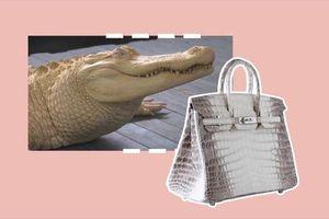 Giải mã nguyên nhân túi Hermès Himalaya Birkin giá 12 tỷ đồng