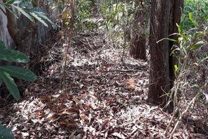 Không khởi tố vụ phát hiện hơn 300 xác thai nhi tại nhà máy rác ở Cà Mau