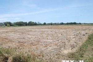 Quảng Trị hạn hán kéo dài khiến đồng khô, lúa 'khát'