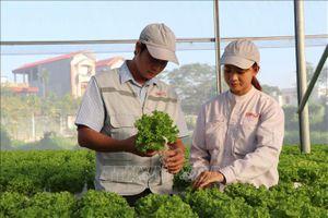 Nghị quyết về giải pháp khuyến khích, thúc đẩy doanh nghiệp đầu tư vào nông nghiệp