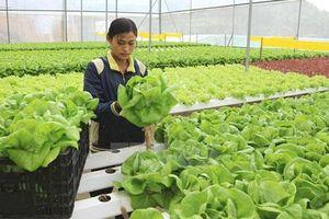 Ngành nông nghiệp quyết liệt giảm thủ tục kiểm tra chuyên ngành
