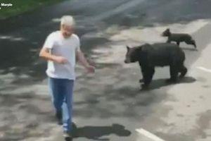 Gấu mẹ xua đuổi người đàn ông cố đến gần đàn con của mình