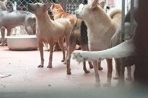 Trung tâm vật nuôi gây ô nhiễm giữa Thủ đô có bị xử lý?