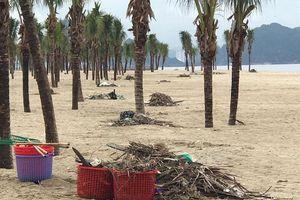 Bãi biển Bãi Cháy hứng 6 tấn rác mỗi ngày từ du khách