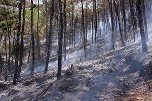 Rừng thông đặc dụng tại Huế cháy dữ dội