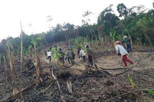 Nghệ An: Huy động lực lượng khống chế cháy rừng ở địa bàn xã biên giới