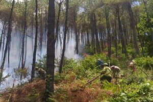 Rừng thông Tam Thai ngay nội thành Huế đang cháy