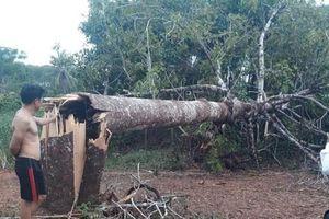 Nghệ An: Nhà tốc mái, cây cối, cột điện gãy đổ hàng loạt sau trận lốc xoáy kinh hoàng