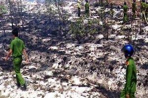 Thắp hương, đốt vàng mã làm cháy gần 5ha rừng phòng hộ