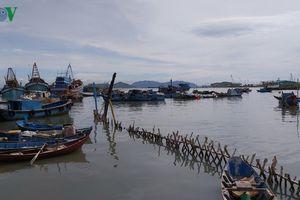 Ngư dân Bà Ria Vũng Tàu nghi ngờ có bảo kê đánh bắt thủy sản tận diệt