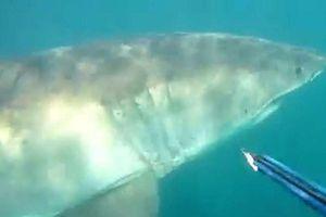 Cuộc 'chạm trán' bất ngờ của thợ lặn và cá mập trắng