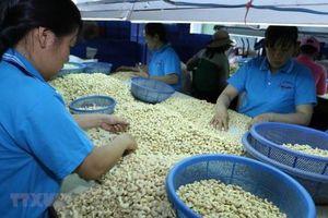 Việt Nam tiếp tục đứng thứ 1 thế giới về xuất khẩu điều nhân