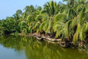 Bến Tre nâng cao giá trị kinh tế từ cây dừa