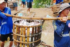 Bầm dập theo cá tra