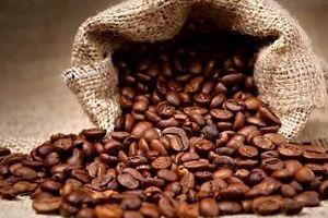 Giá cà phê hôm nay 22/7: Đầu tuần giá cà phê dự báo sẽ tăng