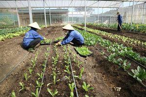 Lâm Đồng khởi sắc sau 10 năm xây dựng nông thôn mới