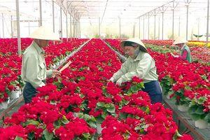 Tìm giải pháp lan tỏa thương hiệu nông sản Lâm Đồng