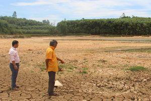 Hạn hán dai dẳng: Cây chết khô, hồ trơ đáy ở Nghệ An