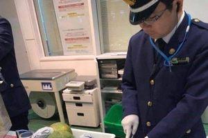 Du lịch Nhật, đừng bao giờ mang những thực phẩm, trái cây sau