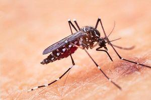 Cảnh báo ký sinh trùng sốt rét kháng thuốc lan khắp Đông Nam Á