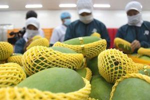 Trái cây Việt thâm nhập thị trường cao cấp