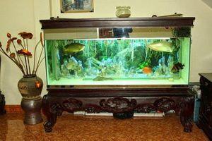 Lưu ý khi đặt bể cá trong nhà chung cư