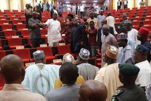 Nghị sĩ Nigeria náo loạn tại phiên họp vì rắn bất ngờ xuất hiện