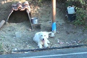 Chủ mất vì tai nạn, chú chó 'dọn' đến ở tại hiện trường