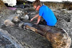 Bất ngờ tìm thấy xương đùi khủng long nặng gần nửa tấn ở Pháp